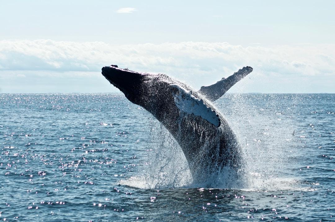 baleine-docker